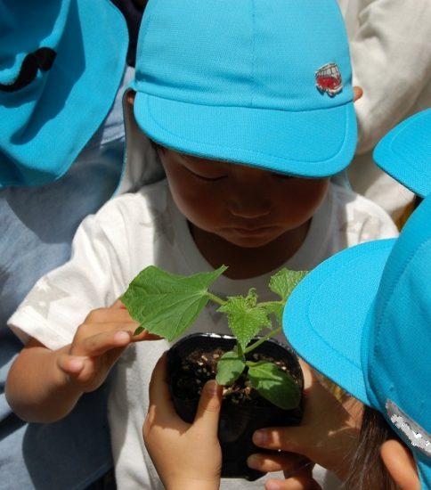 夏野菜の苗とひまわりの種植え