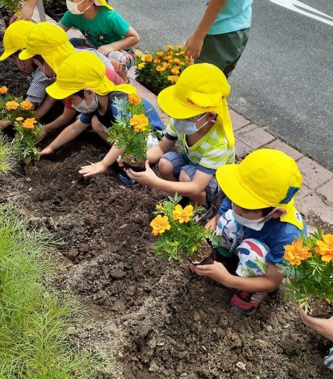 南公園で花苗植えを体験!