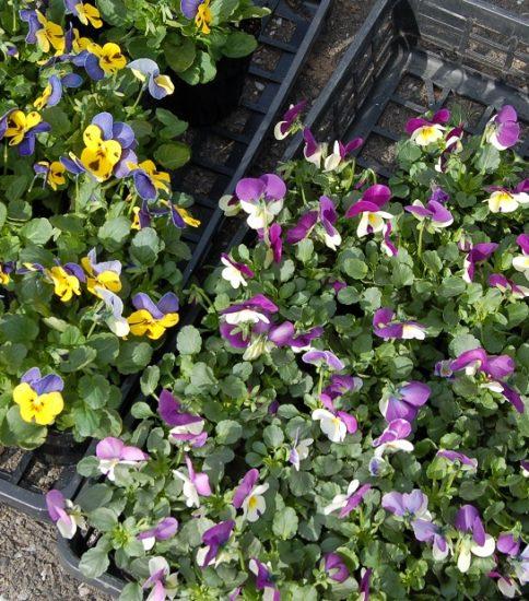 南公園の花苗植えは今年2度目です!